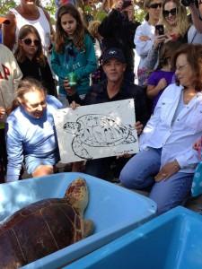 1904090 10152175501650743 724425575 n 225x300 Wyland Assists in Releasing Sea Turtles