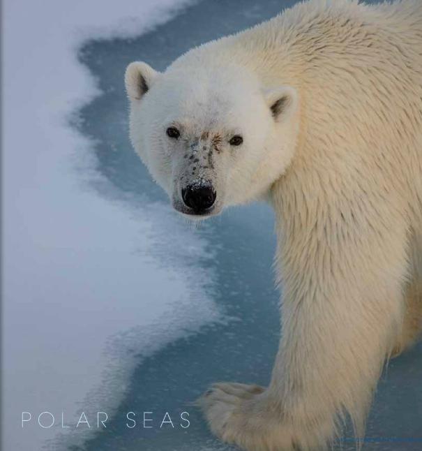 polar seas Gallery