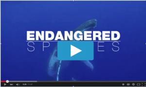 endangered species 300x180 Gallery